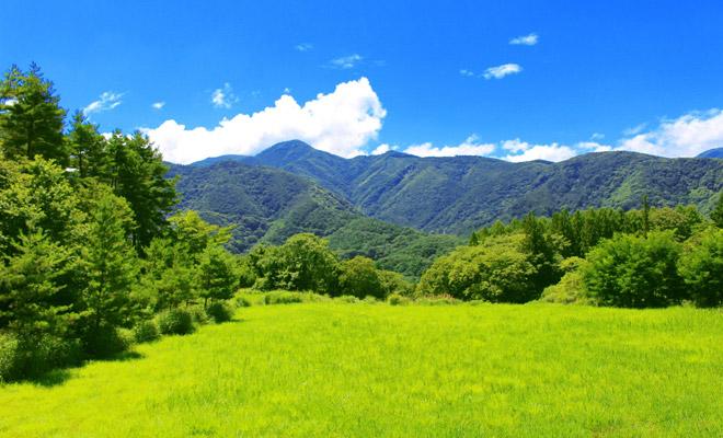 夏の野山web