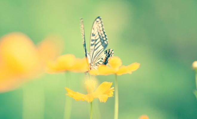 1804名古屋コラム蝶